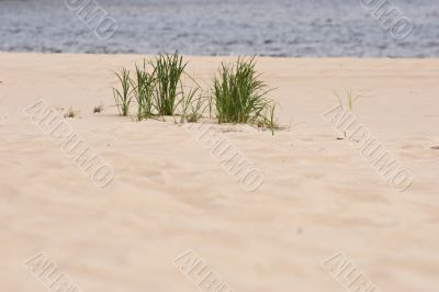 grass on sandy beach