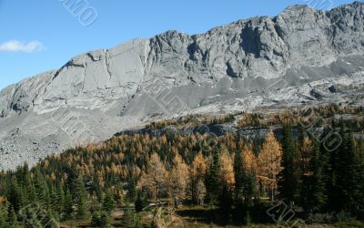 Whistling Ridge with larches