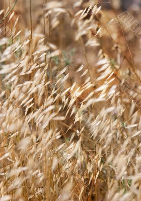 Wind in a dry grass
