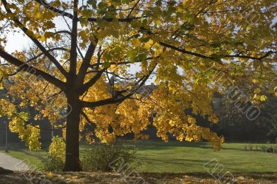Magnificent autumn withering