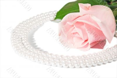 Rose and pearls.