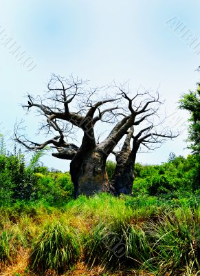 Old Barren Tree