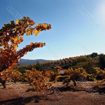 Autumn winery