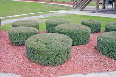 geometric shrubs
