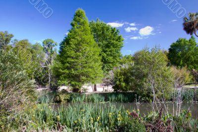 springtime greenery at the pond