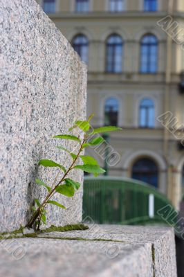 Plant grow up through brick pave on bridge
