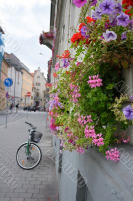 bicycle on street with flowers wall