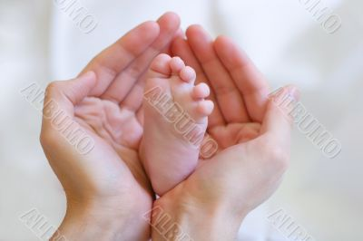 Father gently hold baby`s leg in your hands #1