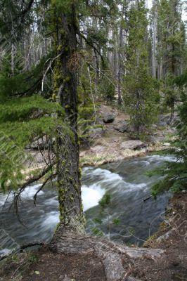 Paulina Creek, blurred, moving water