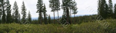 Panorama of central Oregon