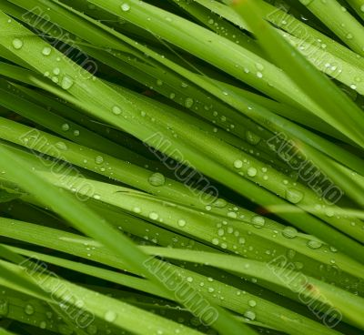 droplets on grass - shallow focus