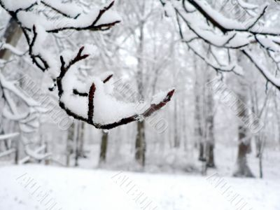 snow covering tree branch background