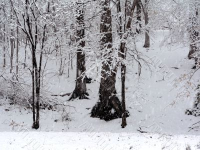 snow covering trees background