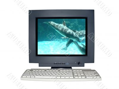 isolated computer monitor with dolphin scene concept