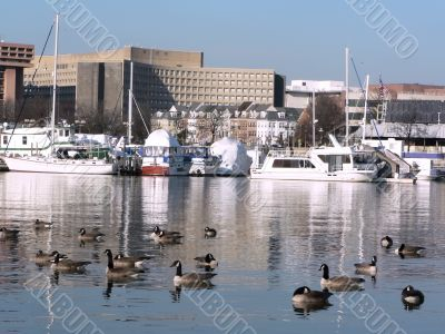 urban landscape - SW waterfront in Washington, DC 2