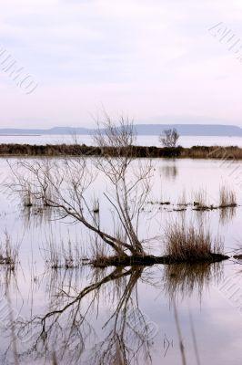 Natural bird reserve