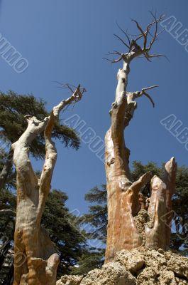 barkless trees