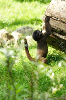 Wool Monkey Kid