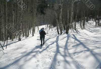 Snowshoe hiker, shadows of aspens