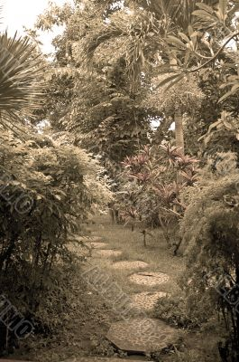 path in eastern garden