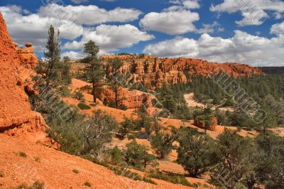 Coniferous woods on red clay.