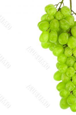 white grape detail isolated on white