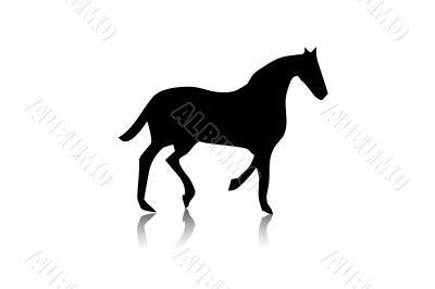 Black horse silhouette,shape,vector,i solated