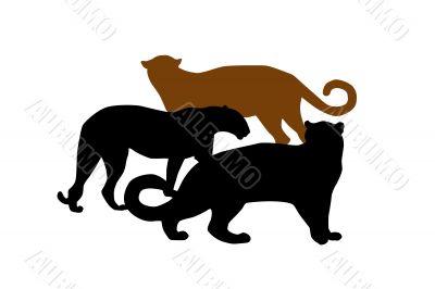 Wildlife silhouettes ,cats,predator,vector