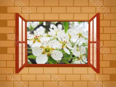 window illustration with pear blossoms