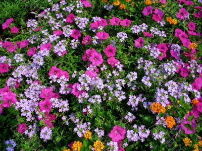colorful flowers 1