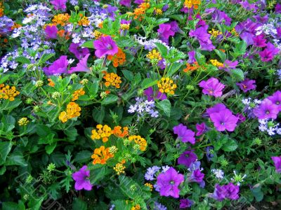 colorful flowers 2