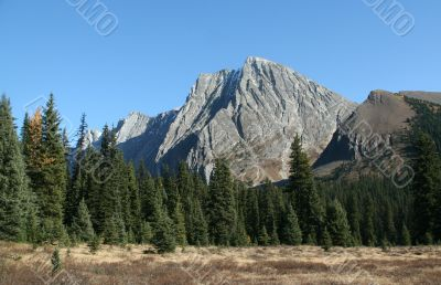 Mountain & spruce forest
