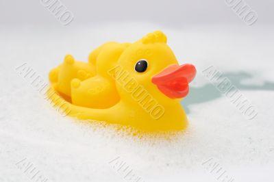 Three rubber ducks in foam water #5