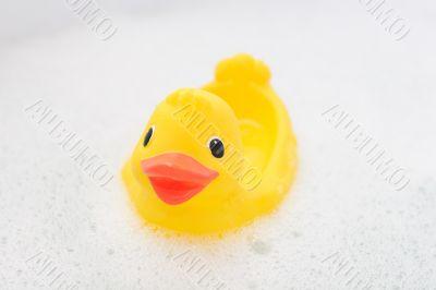 Rubber duck in foam water