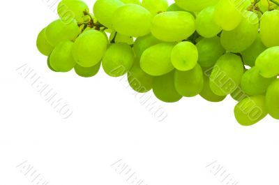 ripe green grape isolated on white