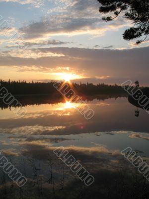 Dawn through pines
