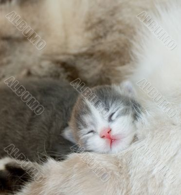 cute kitty sleeping, very shallow focus