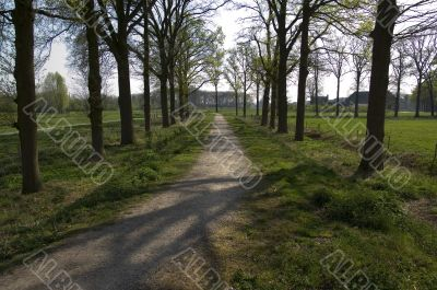 Road flanked bij trees