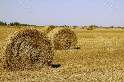 Field with haycocks