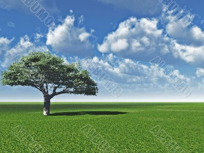 Alone_tree_CL