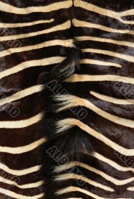 Hide of zebra