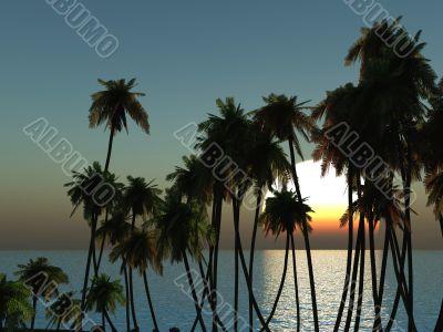 Palms tops
