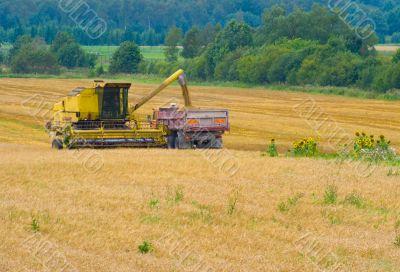 Harvesting time