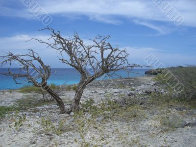 tropical sea scape
