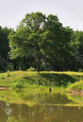 Oak-tree and the lake