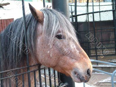 Horse - girl, the portrait