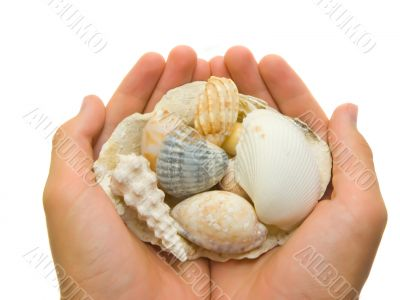 Unique shells