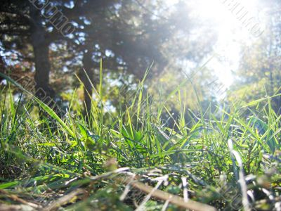 Sunlight and grass