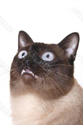 cat, kitten, eye, color, power, action