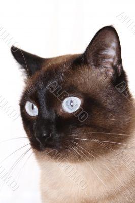 cat,kitten, eye, color, power